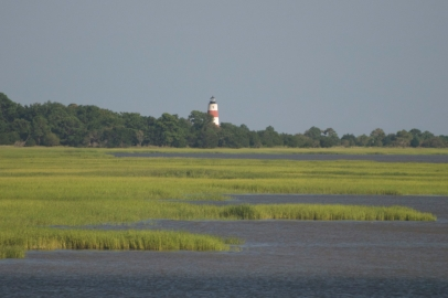 Sapelo-salt-marsh