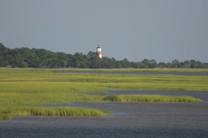 Sapelo-salt-marsh